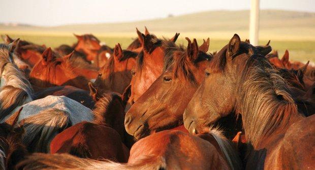 Revoluce na kopytech: Po stopách dávných koní