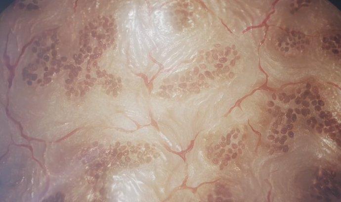 Kůže v procesu 3D tisku