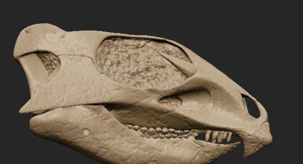 Lebka je nejlepší hračka: Aquilose a kost ve 3D