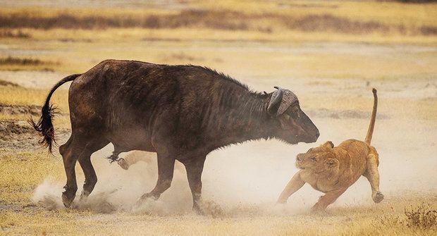 Safari live: Divoká africká zvířata ve vašem pokoji