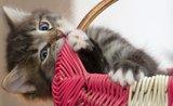 Mačiatko: nový člen domácnosti