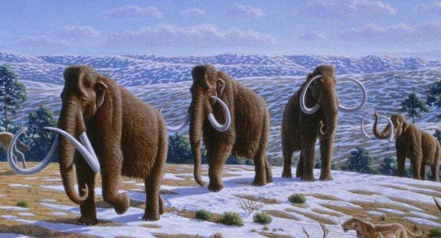 Svět obrů: Megafauna nejsou jen mamuti