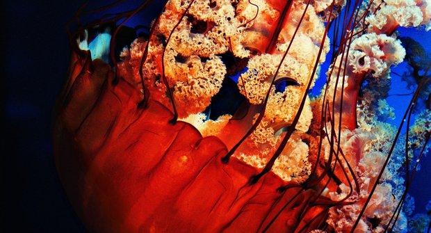 Tajemné medúzy: Mimozemšťané skrytí v moři