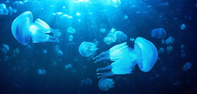 Ako správne ošetriť poranenia od morských živočíchov