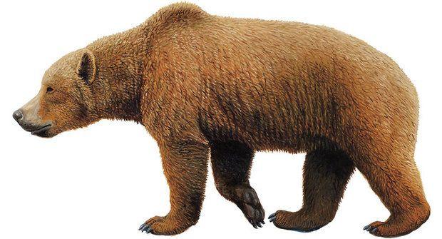 500 tisíc let vegetariánství: Medvědi o mase nevědí
