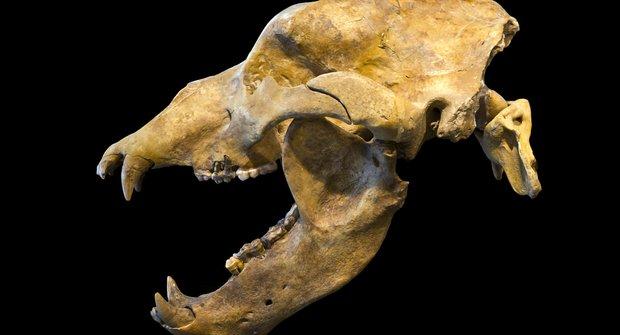 Rod medvědů: Monstra i šelmičky