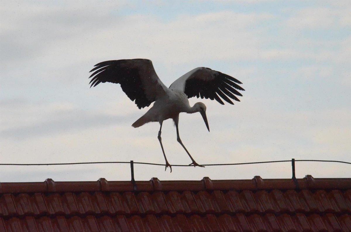 Opeřenec rovnováhu udržoval neustálým máváním křídel.