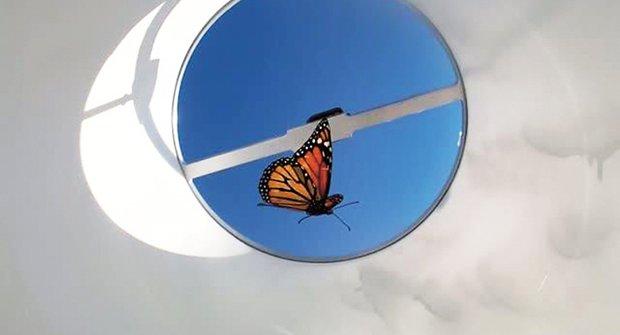 Monarchové v ohrožení: Motýlí migrace bez kompasu