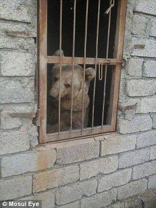 Medvěd za mřížemi zoo v Mosulu