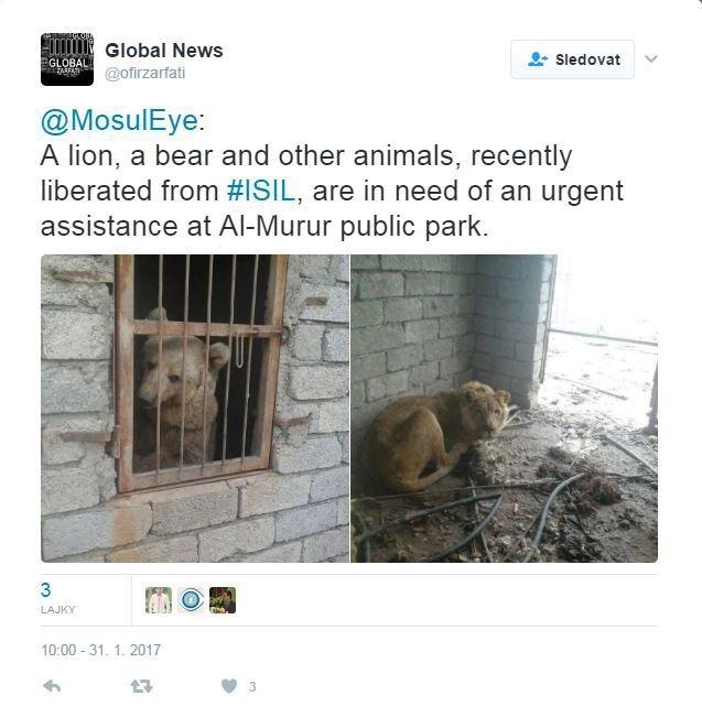 Fotografie na twitterovém účtu Mosul Eye