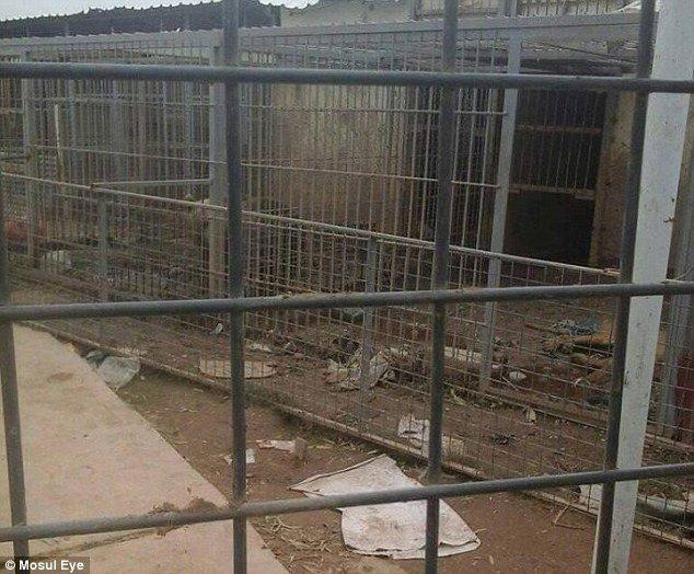Opuštěná zoo v iráckém Mosulu.