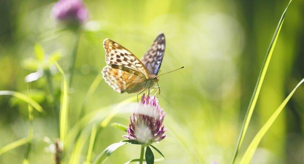 Tajemství motýlího letu: Tleskající křídla a vzduchová kapsa