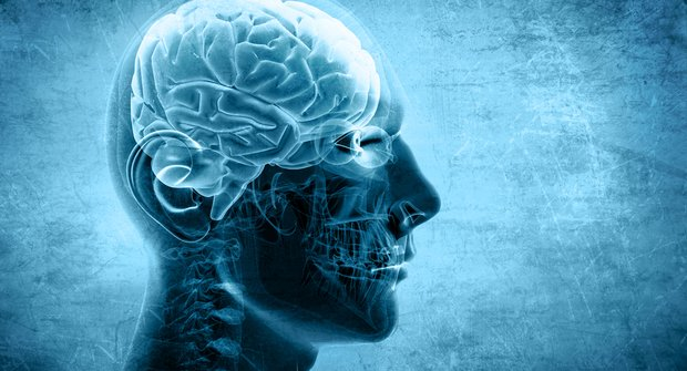 Mozek se vyvíjí i po dvacítce