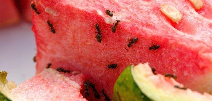 Zaručené triky, jak se zbavit vlezlých mravenců