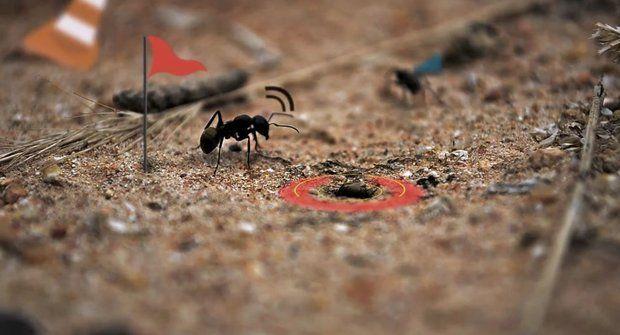 Skutečný život mravence je jako hra! A náramně zábavná