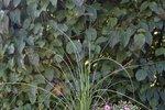Pro venkovní květenu využijte netradičně proutěné koše, které neodmyslitelně patří kpodzimu. Využívají se vzahradách na sběr šťavnaté úrody, nebo na milované houbaření. Tak uzměte jeden, dva, tři a hurá na to! Zkrášlete si domov zářivými květy a barevnými listy. Na následujících stránkách pro vás designérka Martina zM ART studia nachystala několik úžasných variant.