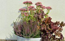 Opět jedna zvelmi zajímavých kombinací rostlin, které neodmyslitelně patří kpodzimním dnům. Naaražujte si rostlinky vkvětináčích, tentokrát do kontrastní bílé keramické nádoby.