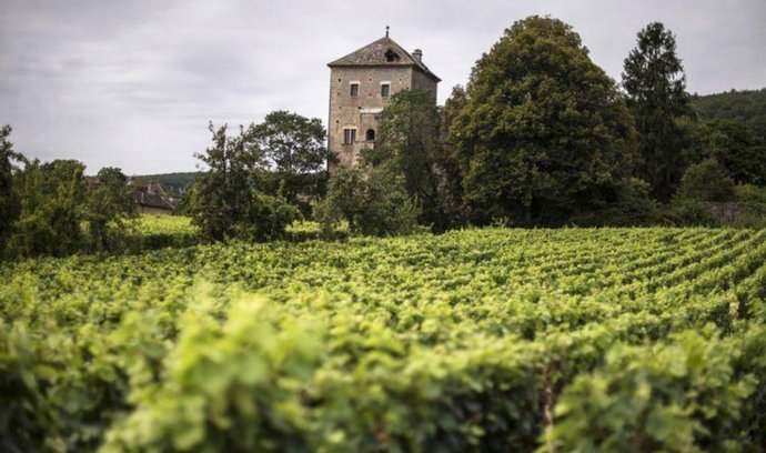 Napoleonova oblíbená vinice