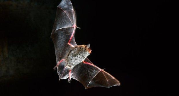Nové objevy: I netopýřata se musí učit