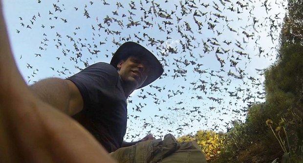 Horor živě: Když milióny netopýrů najednou vyrazí na lov