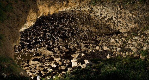 Podivuhodná místa: Netopýří jeskyně Bracken