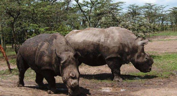 Nosorožci letěli domů