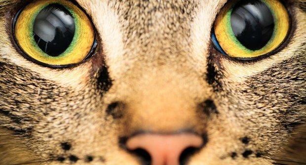 Očima zvířat