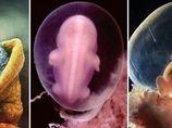 Od početí k porodu. Fascinující snímky zrození, jak ho viděl známý fotograf