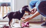 Motivujte psíka pri tréningu správne: 5 tipov na odmeny