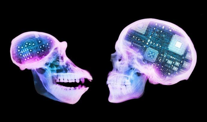 opice, mozek