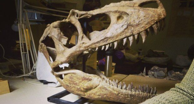 Dinosaurus ve vesmíru: Vyletěla si fosílie Rexe