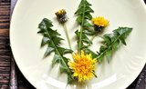 Jarní vaření: připravte si dobroty z pampelišek