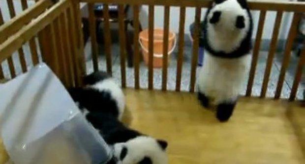 Malá kung fu panda podniká velký útěk