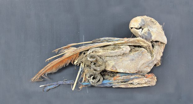 Mumie papoušků: Svědci ptačího putování