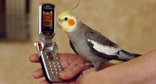 Užvanění papoušci