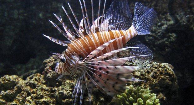 Pruhovaní vetřelci: Biologové ve válce s rybami