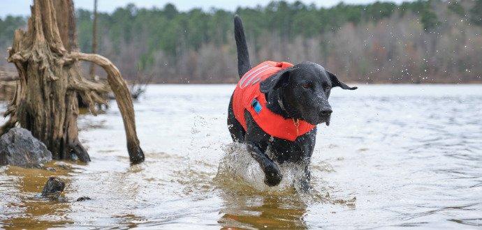 Pes a voda: jak ho naučíte plavat, aby si zlepšil zdraví