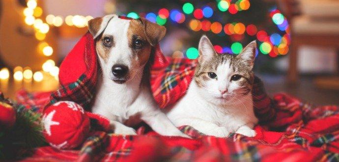 Ako na Silvestra upokojiť vystrašené psy a mačky