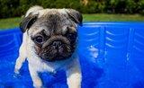 8 věcí, bez kterých se váš hafan v létě neobejde