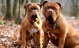 Co hrozí psům na podzim? Předejděte nachlazení i dalším 4 potížím