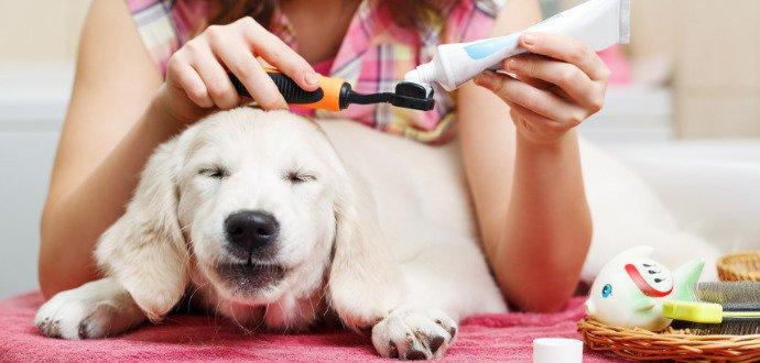 Ochraňte psa před zubním kamenem, pomohou tyčinky i prevence