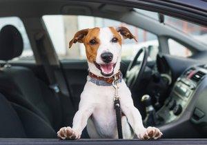 Bezpečná přeprava psa v autě je klíčová pro zraví všech pasažerů.