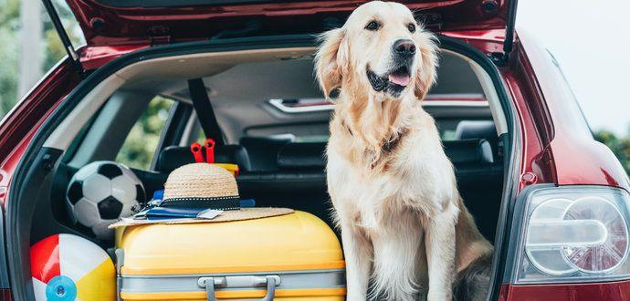 Bezpečné cestovanie so psom