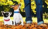 5 tipov, ako naučiť psa poslúchať aj bez cvičáku