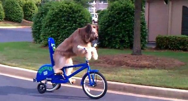 Olé, pes jede na kole!