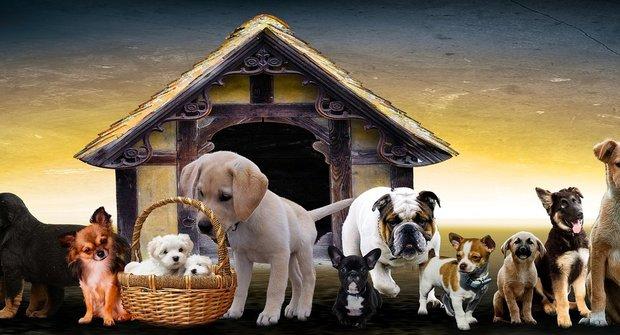 Pes na míru: Jakého psa si mám vybrat?