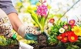 Zahradnický plán: co kam vysadit, aby to pěkně vyrostlo