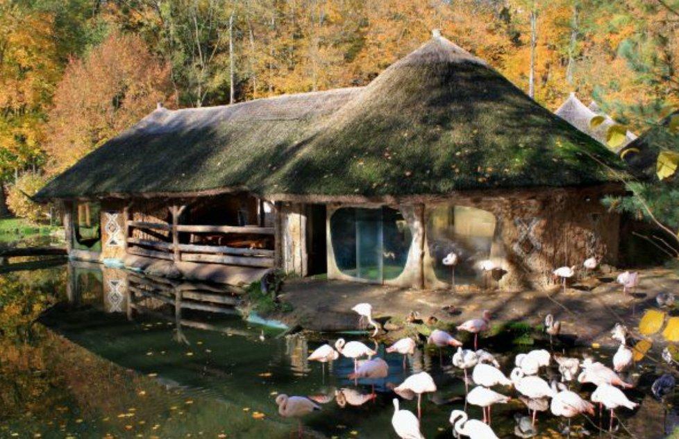 Plameňáci v Zoo Jihlava