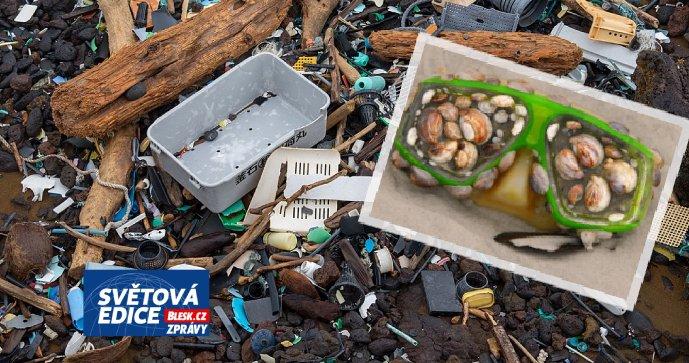 Los plásticos contaminan el mar.