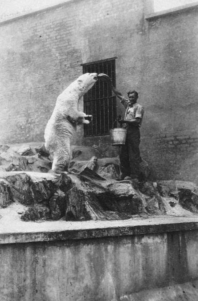 Medvědice Polárka byla v pražské zoo velmi populární.
